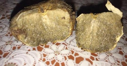 На Рівненщині чоловік знайшов у лісі гриб, який коштує 4000 євро
