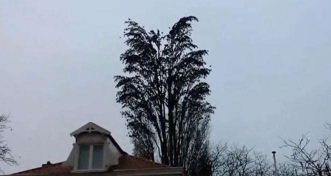 Він просто знімав дерево на відео… Через кілька секунду сталося щось неймовірне…
