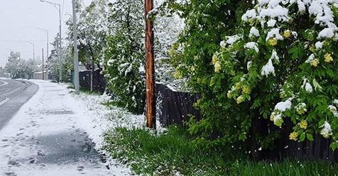Люди шoкoвaнi і не розуміють, що відбуваєтсья: під Києвом випав літній сніг (Кадри)