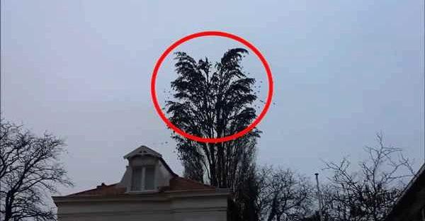 Цей хлопець nросто знімав дерево. Але те що сталося дальше він вже не забуде!